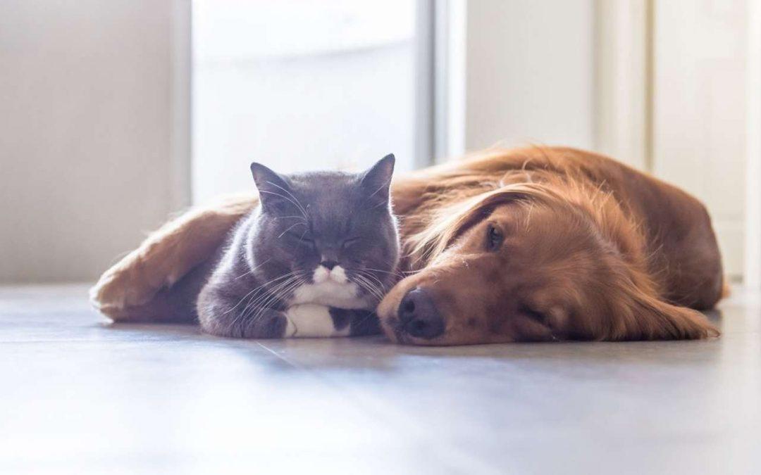 Wie wird Propolis bei Tieren angewendet?